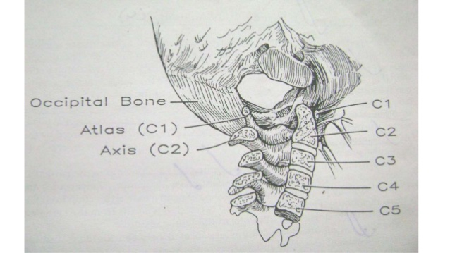 craniovertebral-junction-anomalies-3-638.jpg
