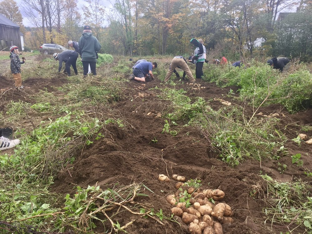 John Stark Equity high school students help us dig potatoes (and they loved it!)