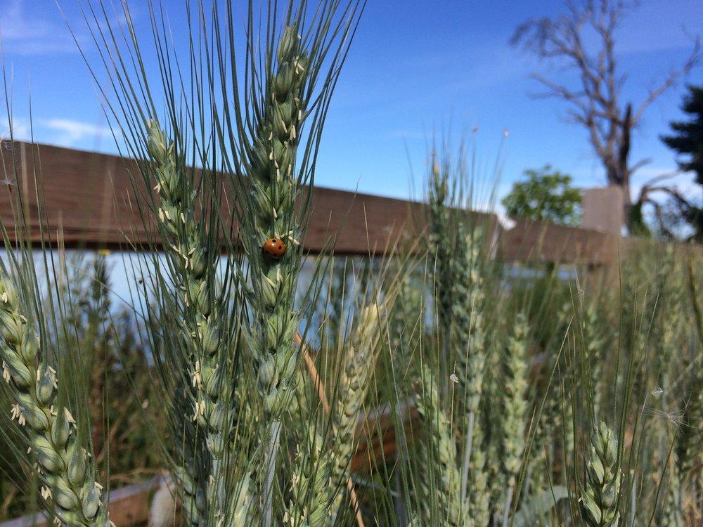 Ladybug at Titlow