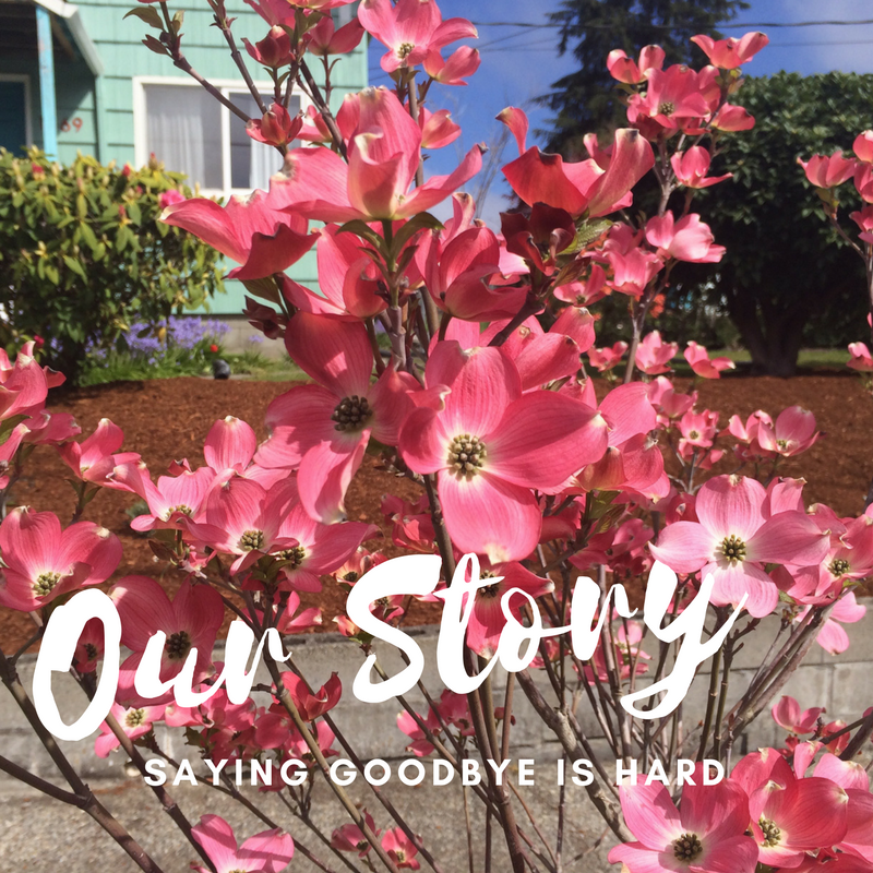 We planted flowering dogwood in the parking strip when we moved in. Seeing them blooming as we carried our final belongings from the home was wonderful and hurt a bit too.