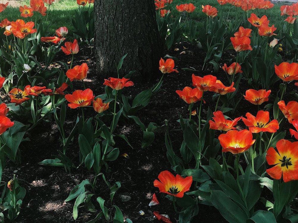 orange flowers under tree pcfl.jpg