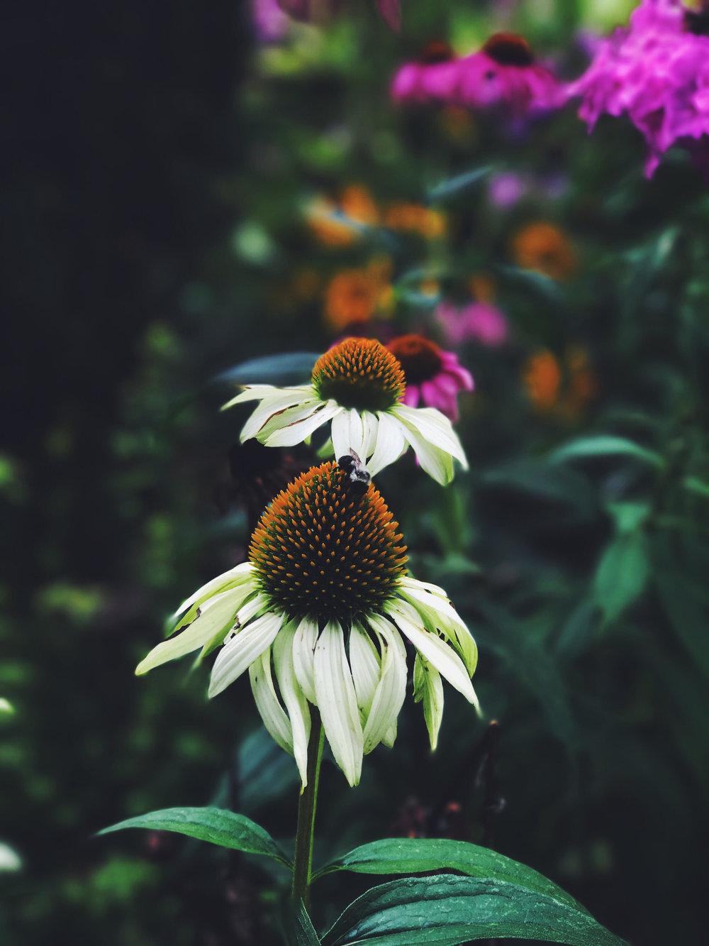 sunflowerzzz - alex.jpg