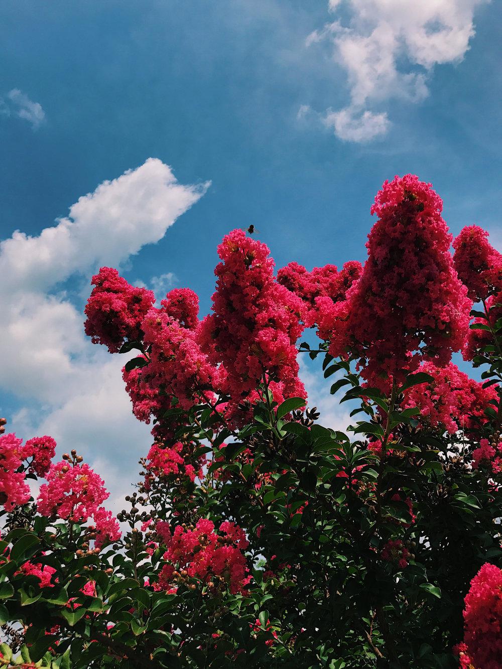 pink flowr rising up - alex.jpg
