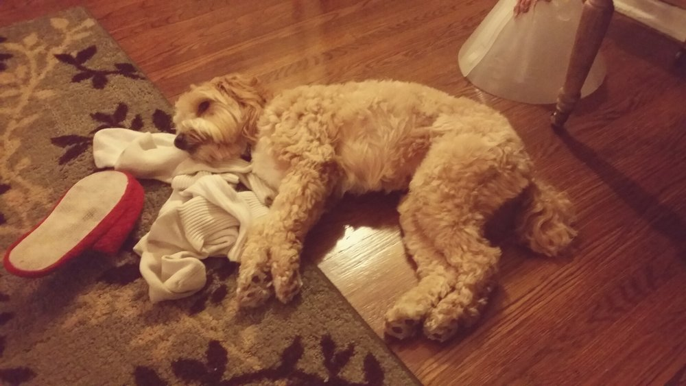 sleepy-sleepy-dog.jpg