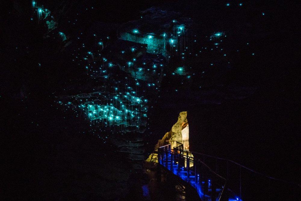 Hobbiton & Waitomo Caves Tour - From $239 NZD per person