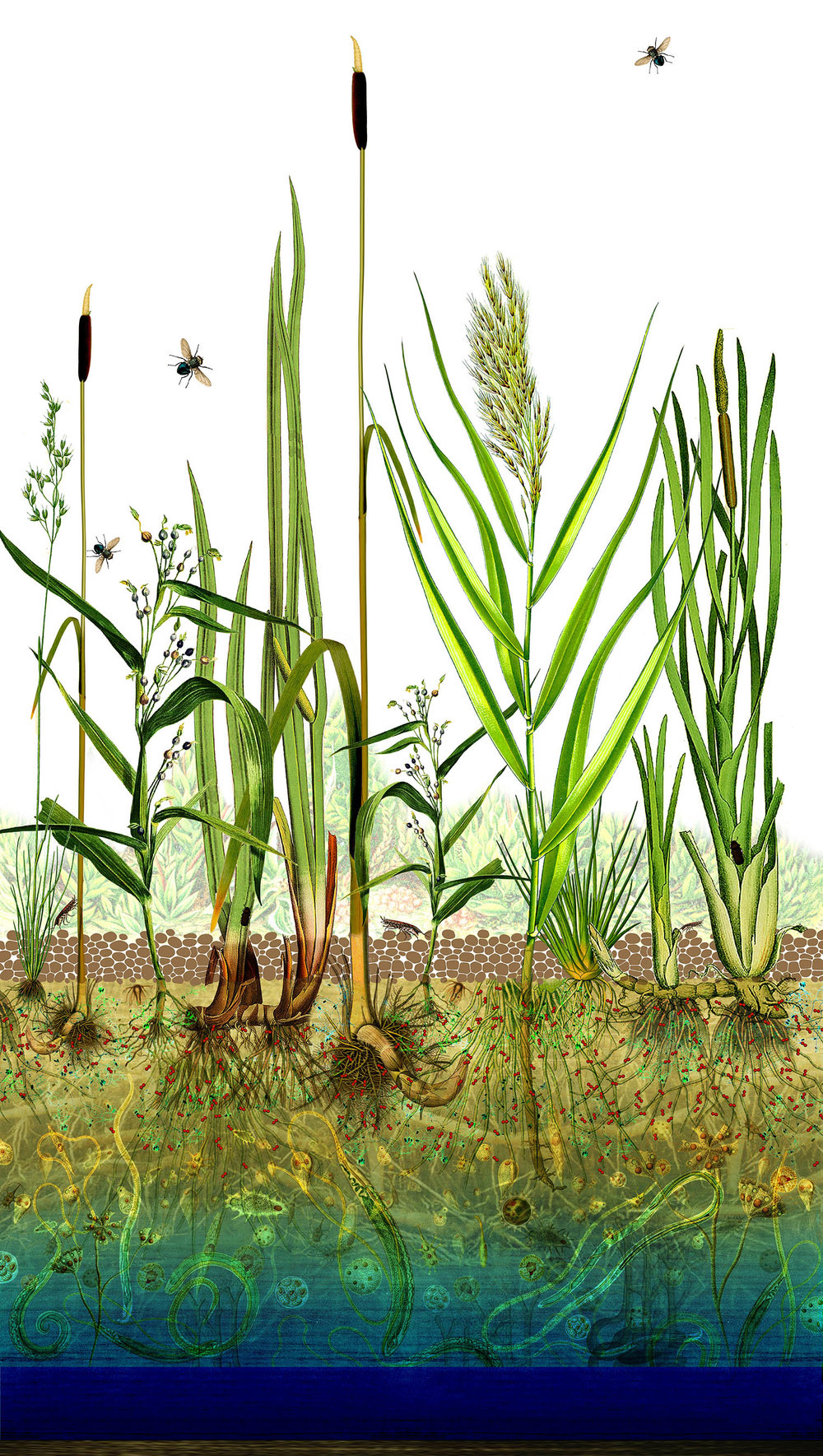 WHAT ARE CONSTRUCTED WETLANDS?