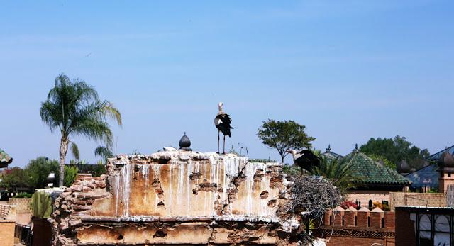 Storks in Marrakech, Morocco