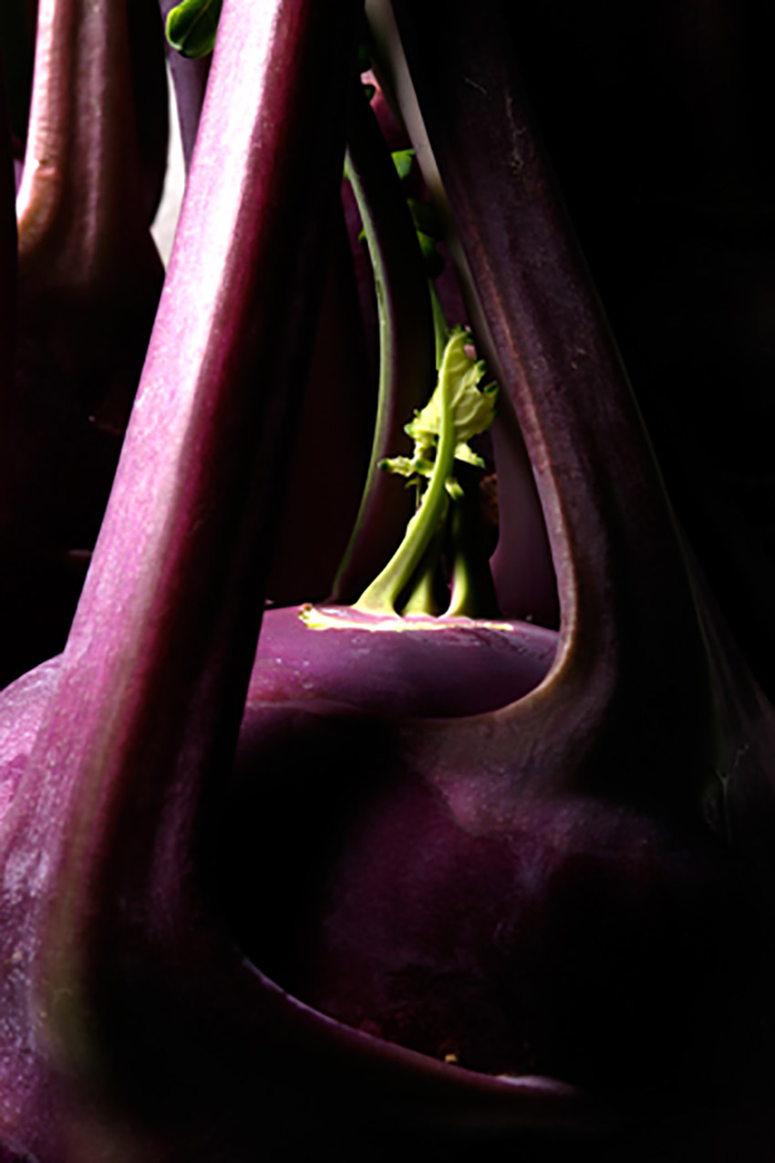 kholrabi - purple a 006a.jpg