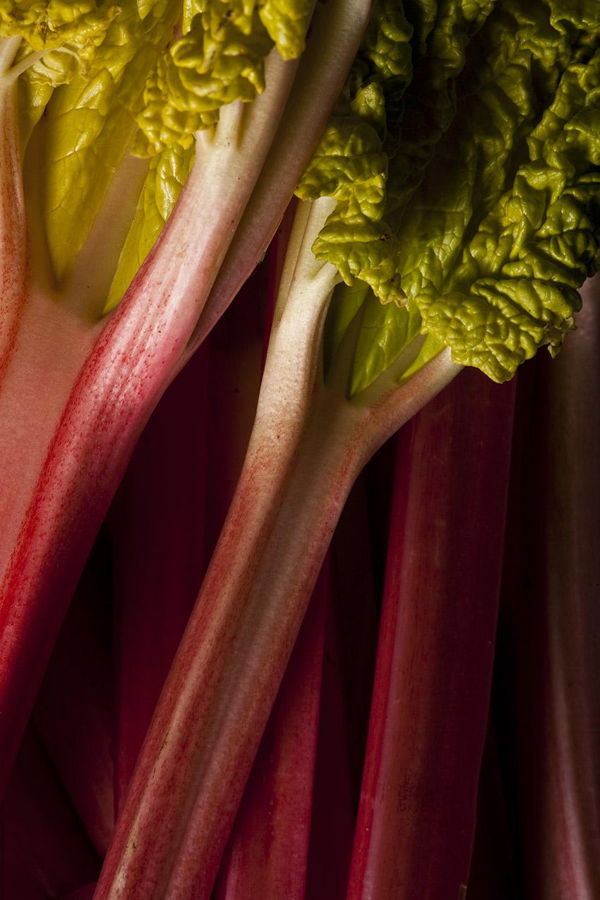Rhubarb 4768.jpg