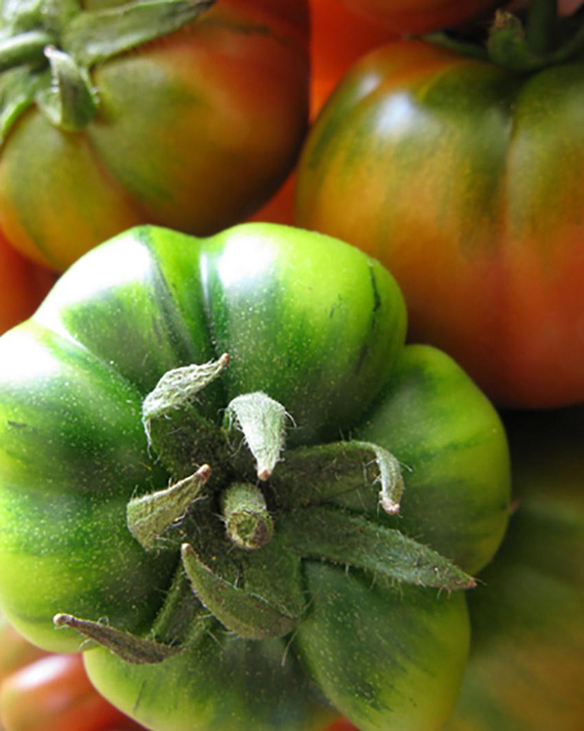 Tomatoes c 179.jpg