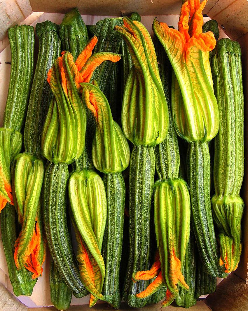 zucchini_4.jpg