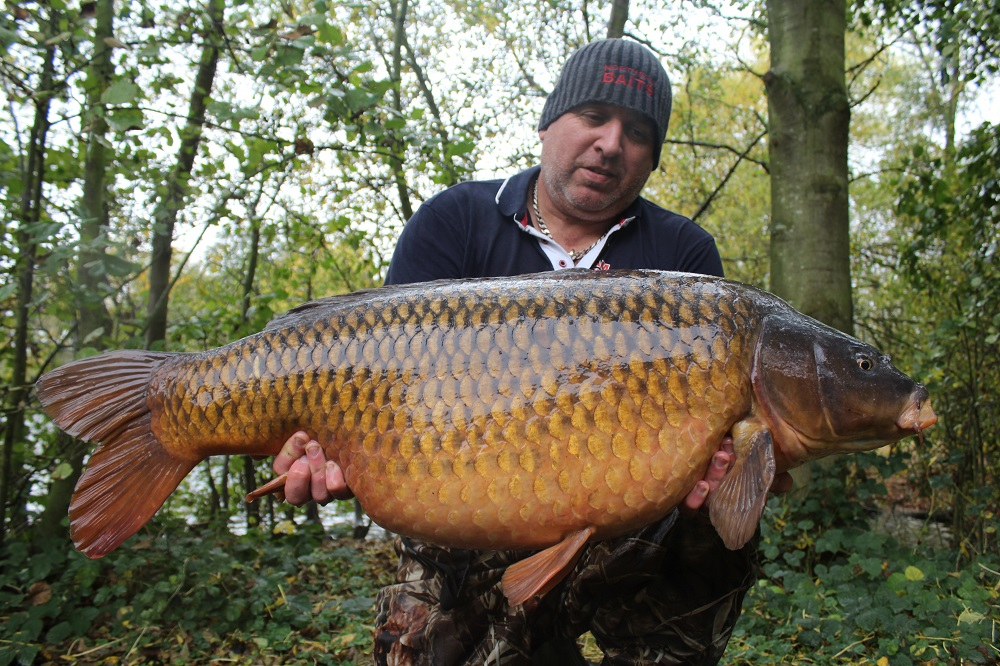 46lb Kingfisher common