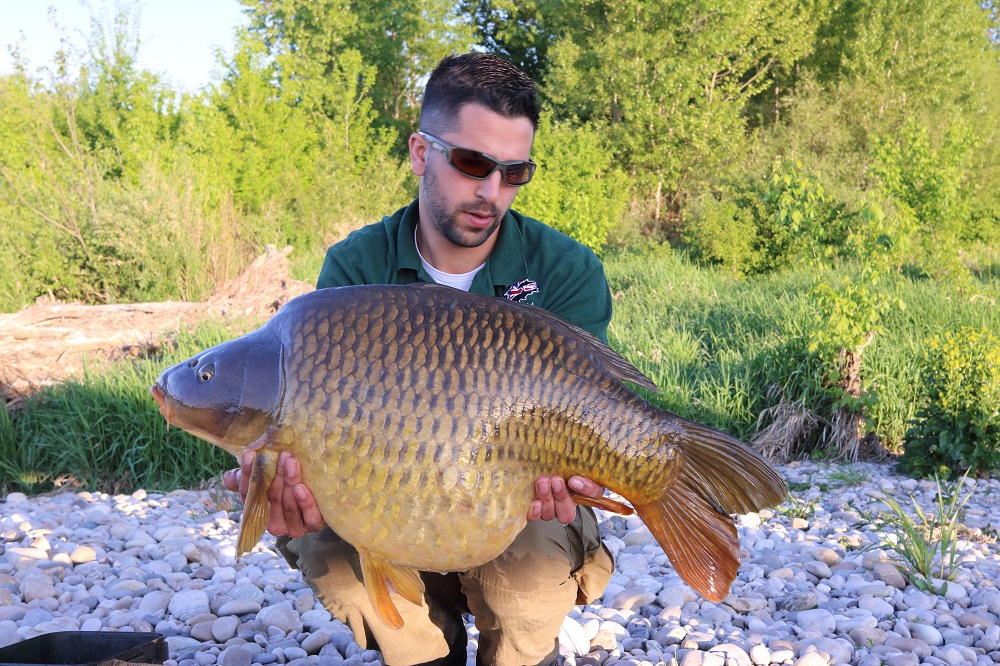 Matt's rotund common of 31lb
