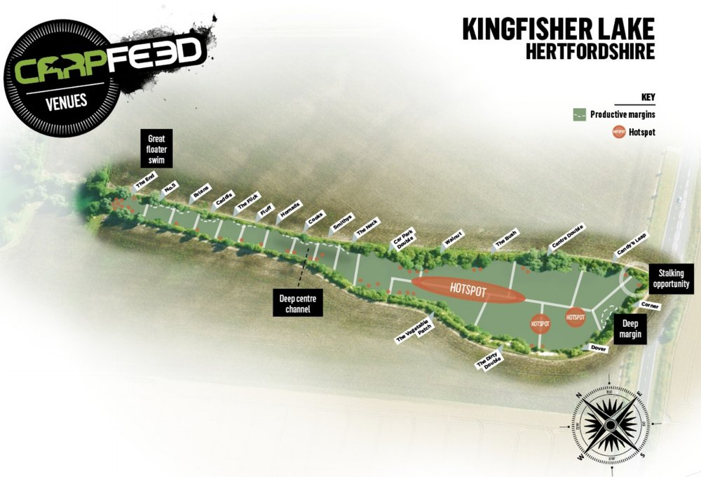 KingfisherCambs.jpg