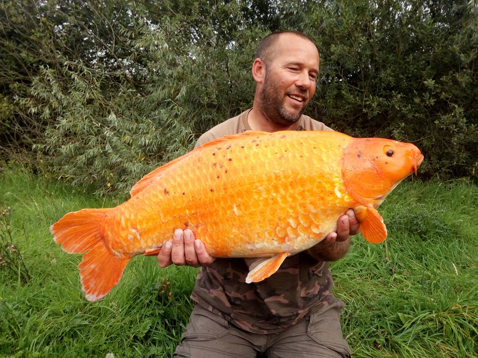 The aptly named Carrot at 27lb 4oz