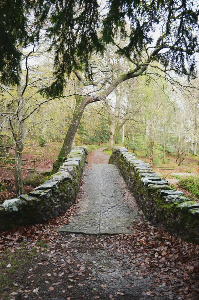 Tollymore Forest stone road.jpg