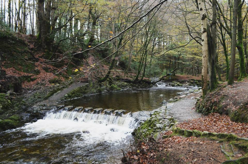 Tollymore Forest river.jpg