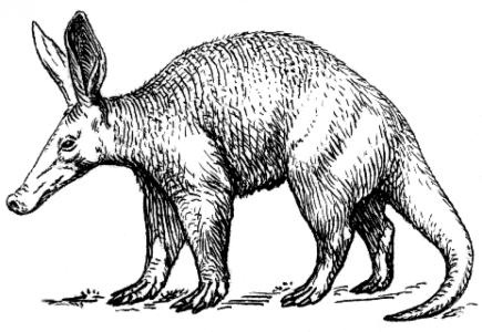 beesker aardvark.png