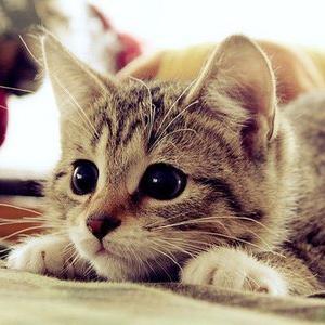 beesker cats.jpg