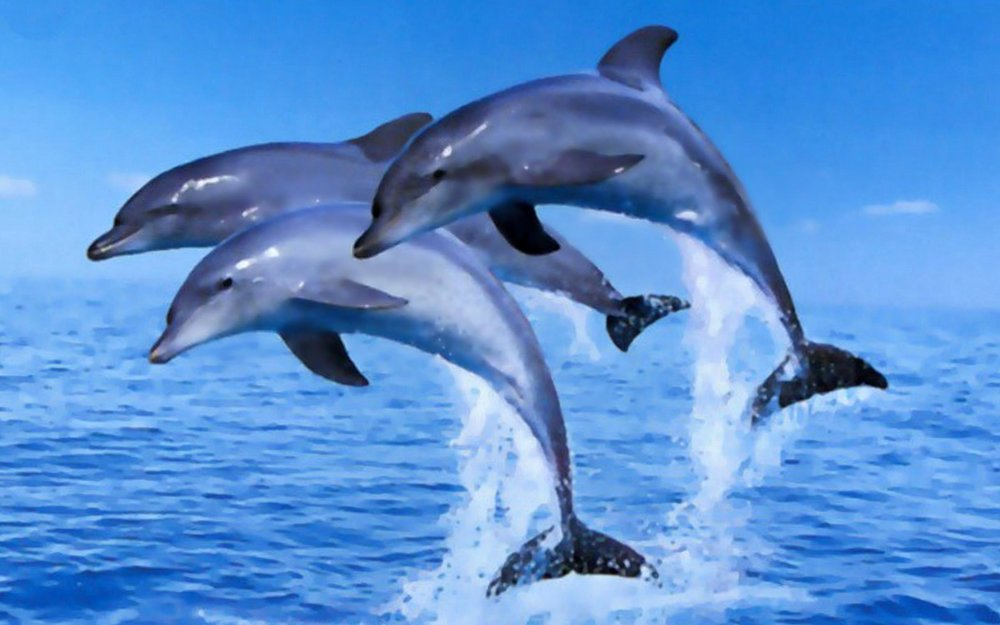 beesker dolphins.jpg
