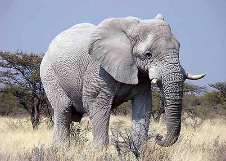beesker elephants.jpg