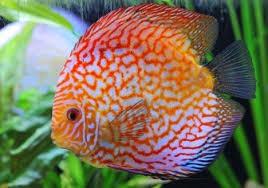 beesker fish.jpg