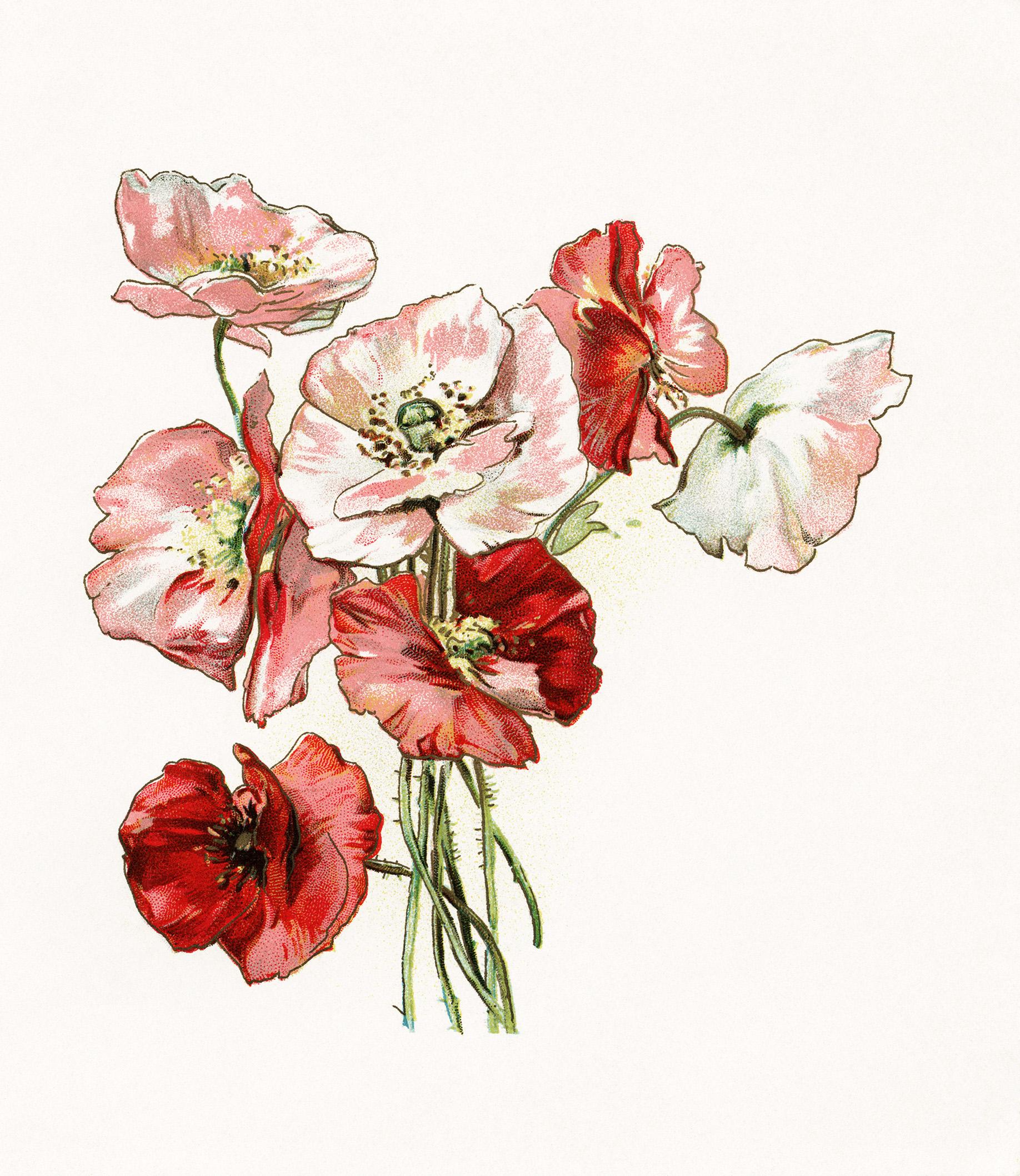 la catrina flower studio