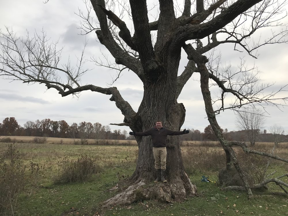 Ash - Fraxinus americana Circumference: 184 in  Height: 84 ft Spread: 86.5 ft Score: 290  Location: Atwater, OH  Nominated by:Danielle Morgan