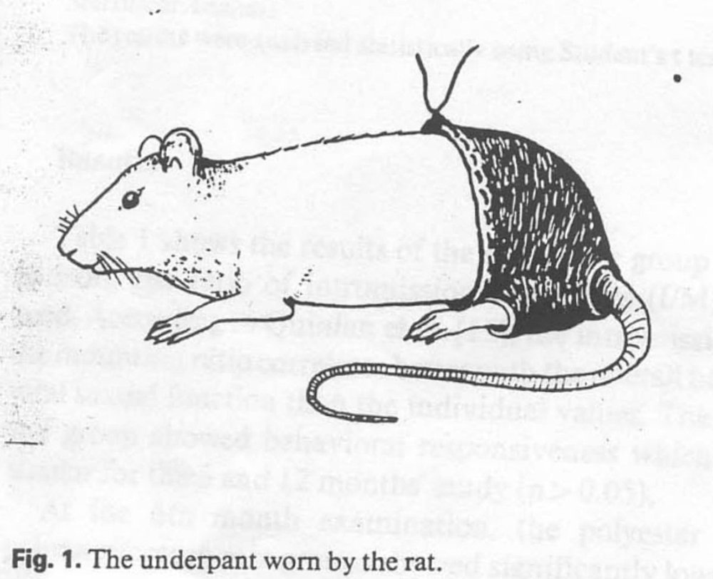 Mouse in Pants.jpg