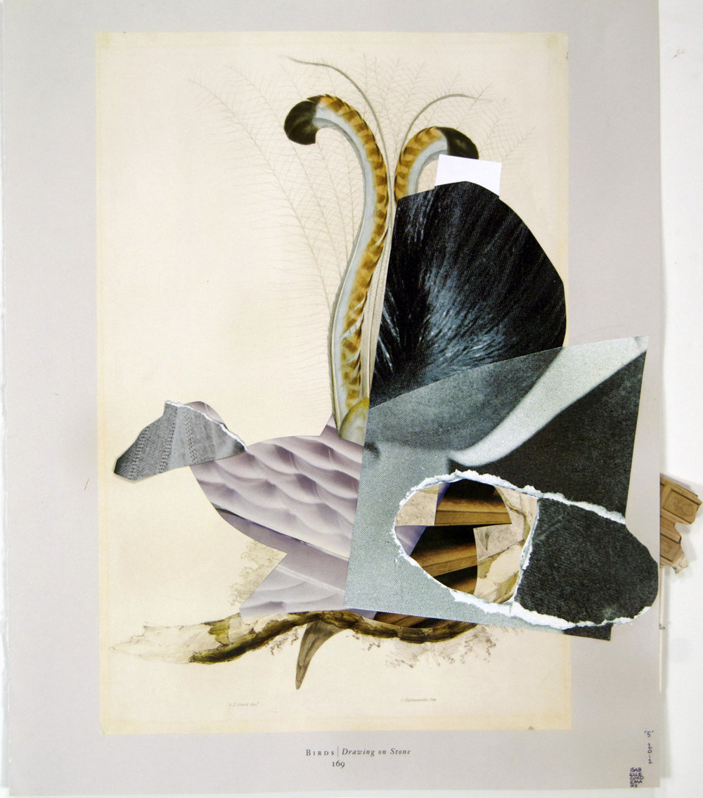 """05, Audubon"", collage, found paper, cardboard, prints, 14""x17"",2012"
