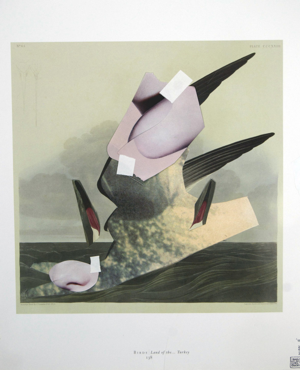 """07_Audubon"", found images, inkjet prints, tape, 13.5""x17"", 2012"