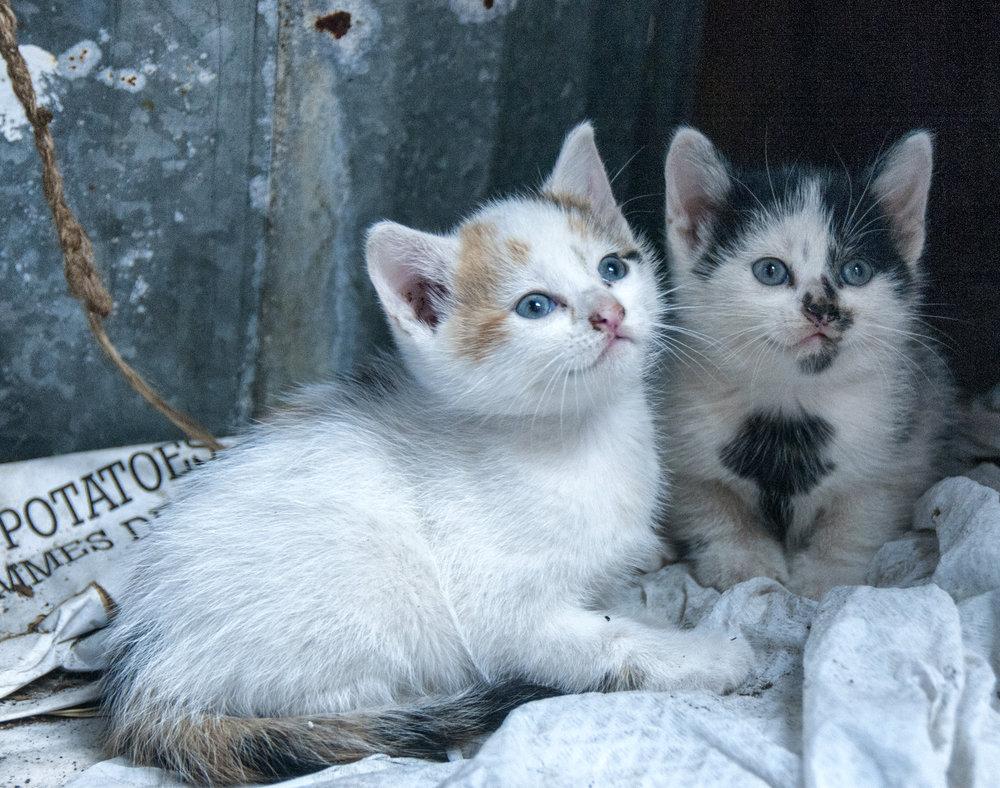 barn_kitties.jpg