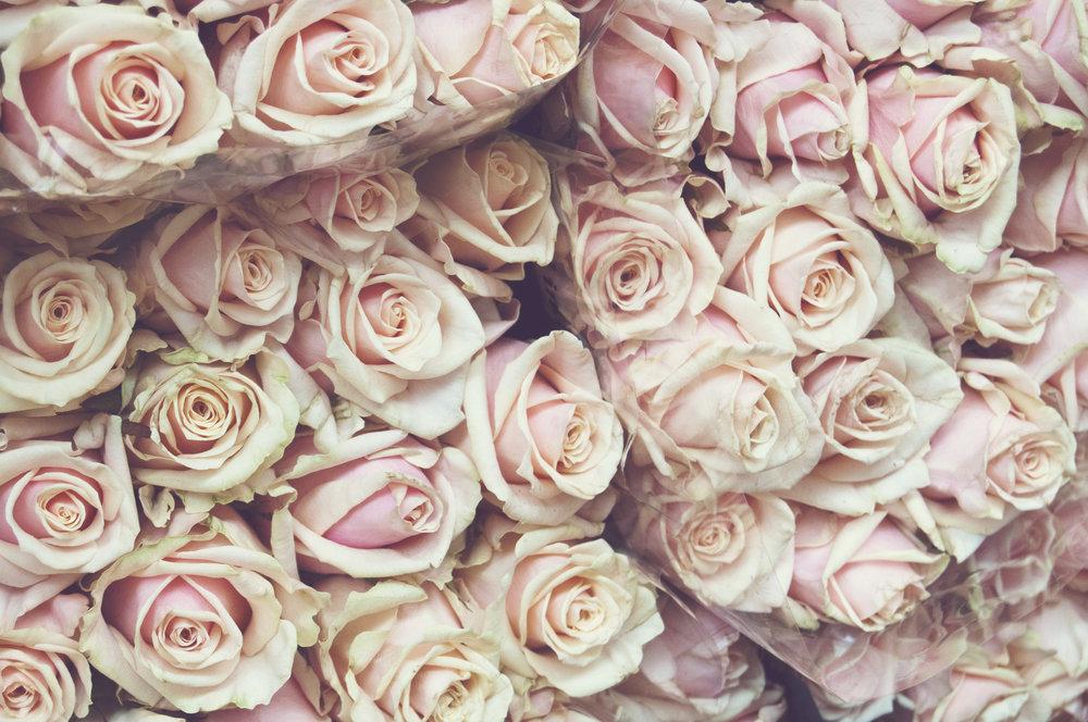 pink_roses.jpg