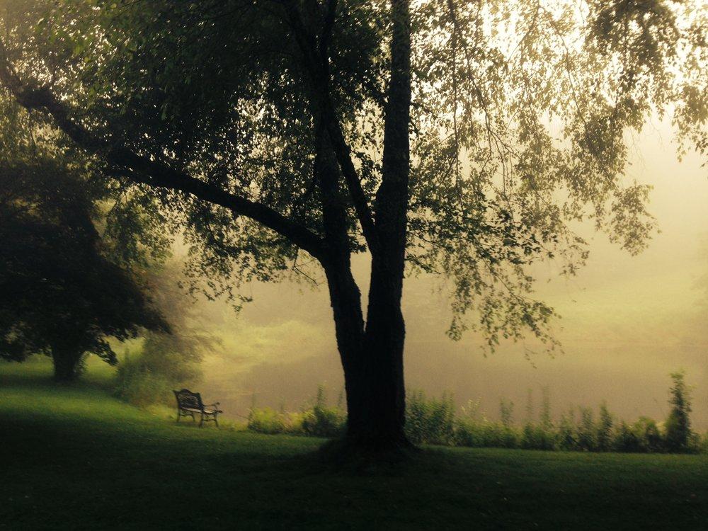 mystical mistical pond .jpg