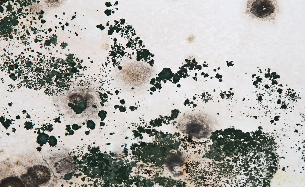 Mold can be a hidden danger. If it's discovered in your structure, we help eliminate it