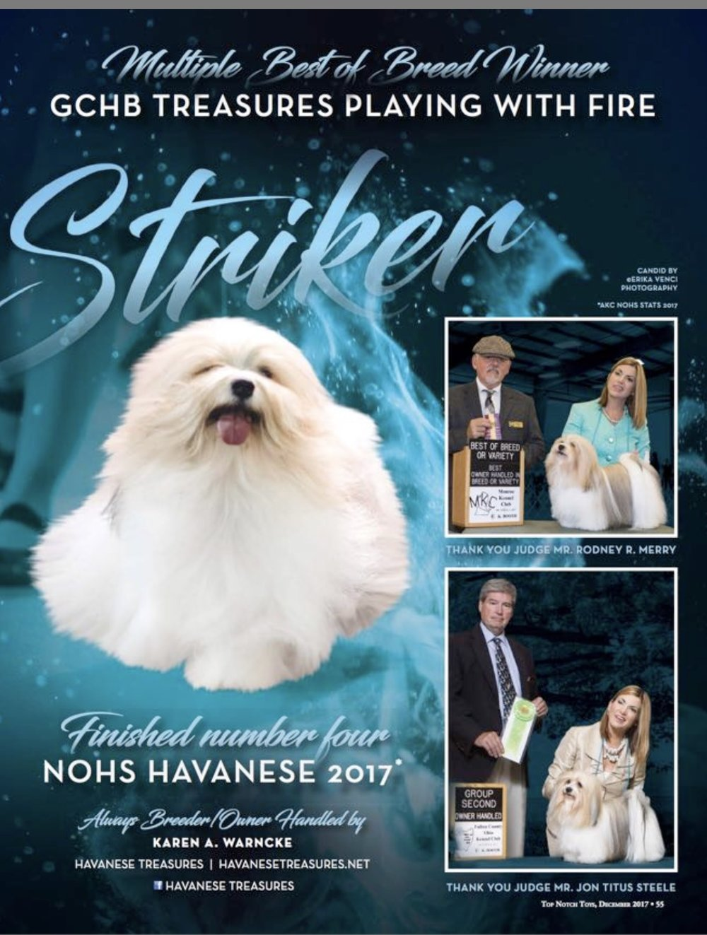 havanese-treasures-top-notch-toys-magazine-striker