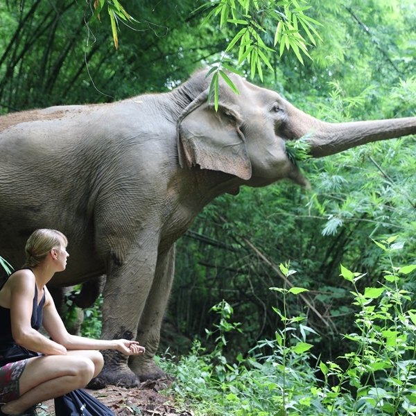 Care-for-Elephants.jpg
