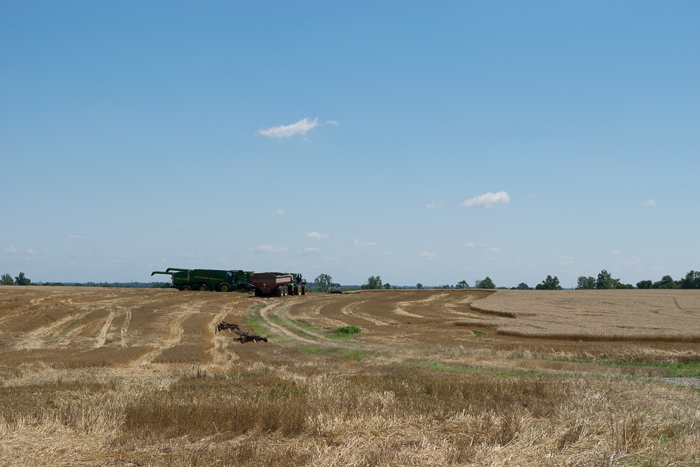 """Harvest season"" is here with farmers collecting wheat"