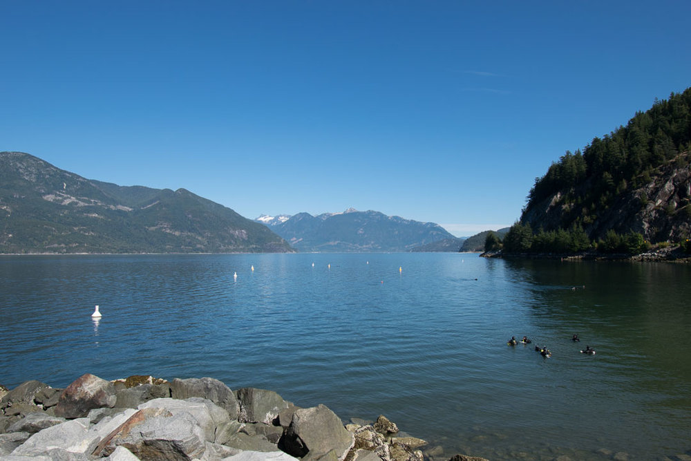 A group of scuba divers hanging in the waters near Porteau Cove