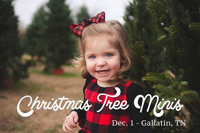 I didn't think I would be doing any other mini's this year but a wonderful local business has extended the use of their tree farm for us this season - sessions will be 15 min. and there's only a few spots so if you're interested, shoot me an message or email!