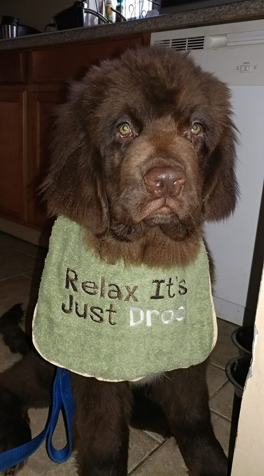 Relax It is Just Drool.jpg