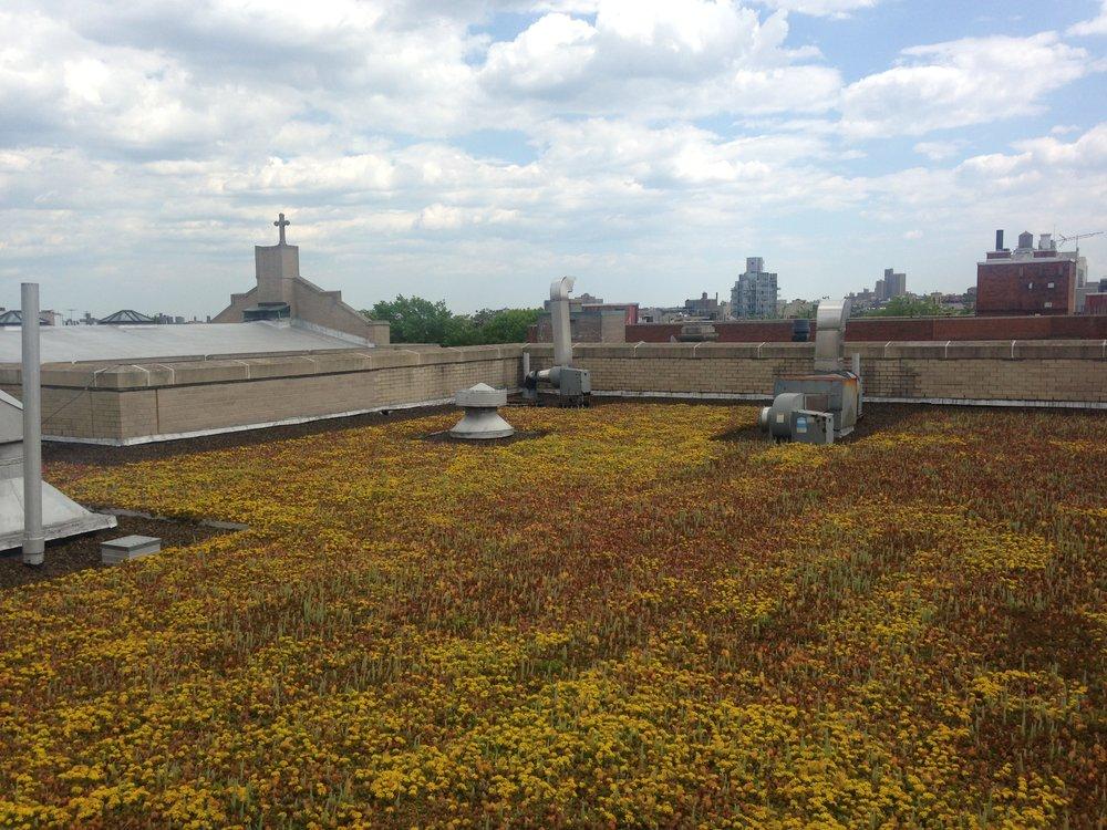 BL Green Roof Summer