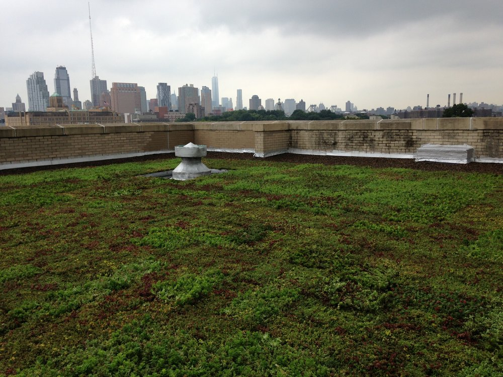 BL Green Roof Spring