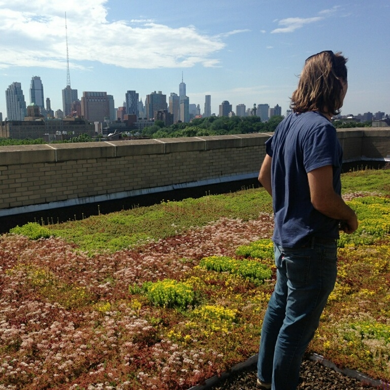 BL Green Roof Flowers