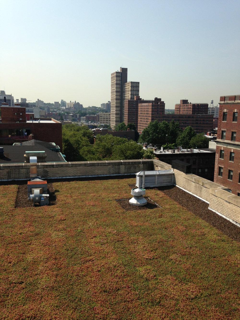 BL Sedum Green Roof
