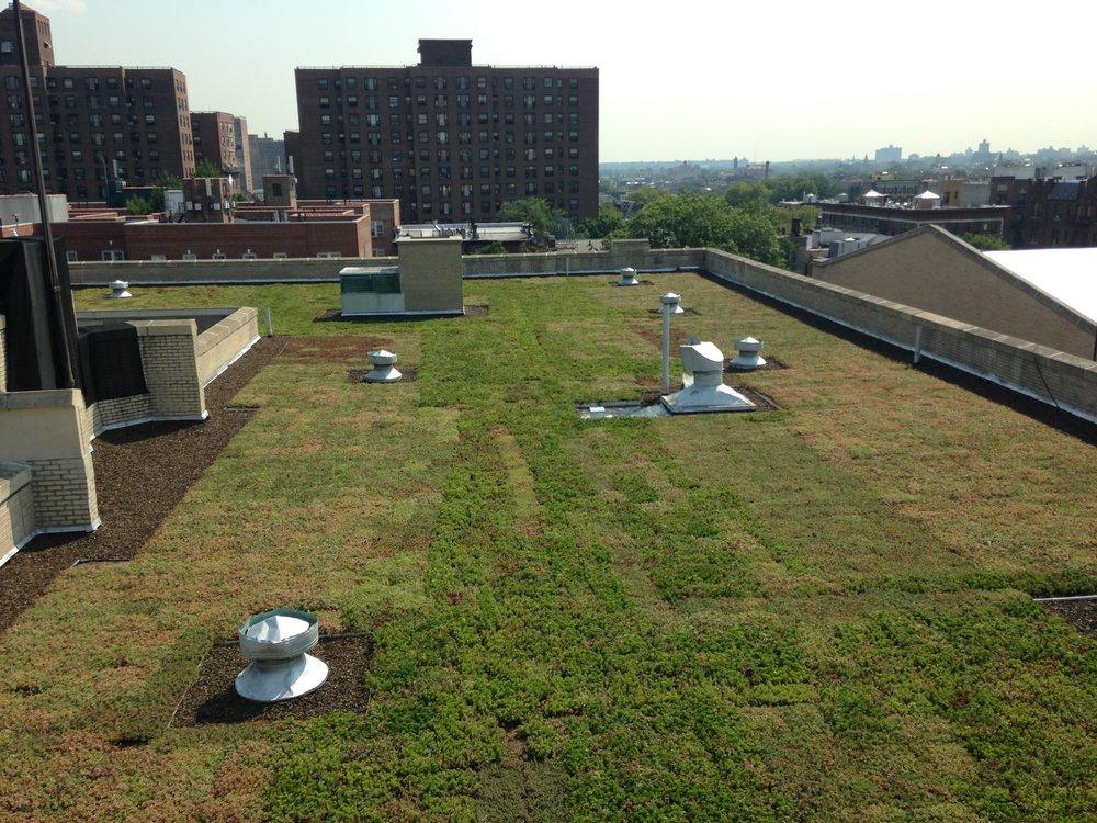 BL Extensive Green Roof
