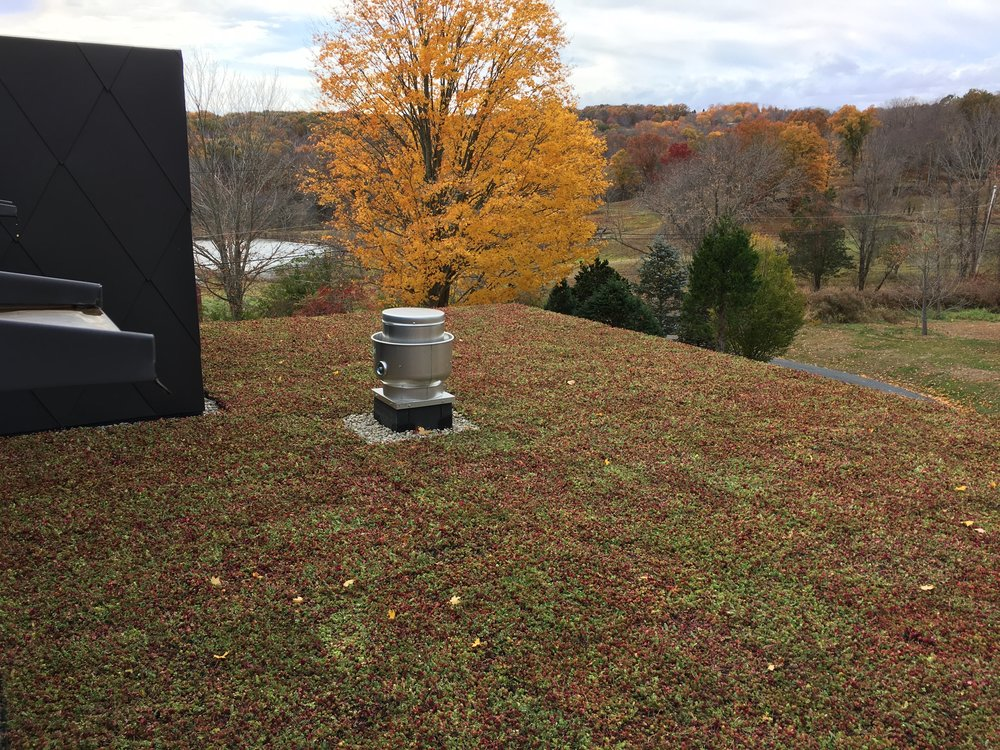 roxbury_highview_creations_green_roof_(3).jpg