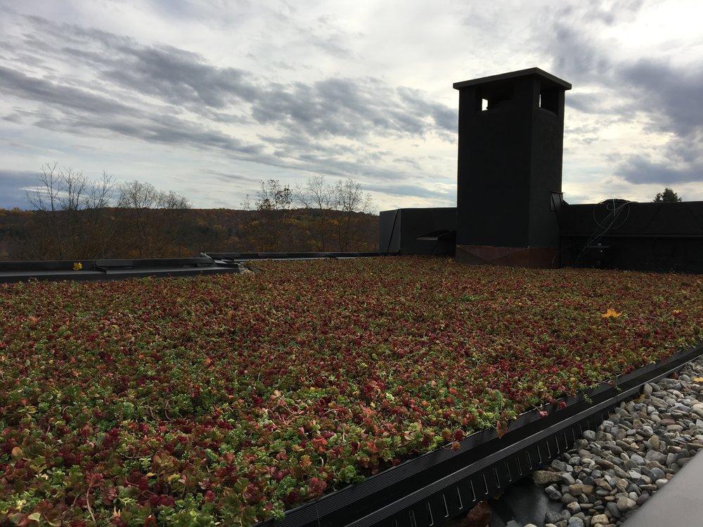 roxbury_highview_creations_green_roof_(4).jpg