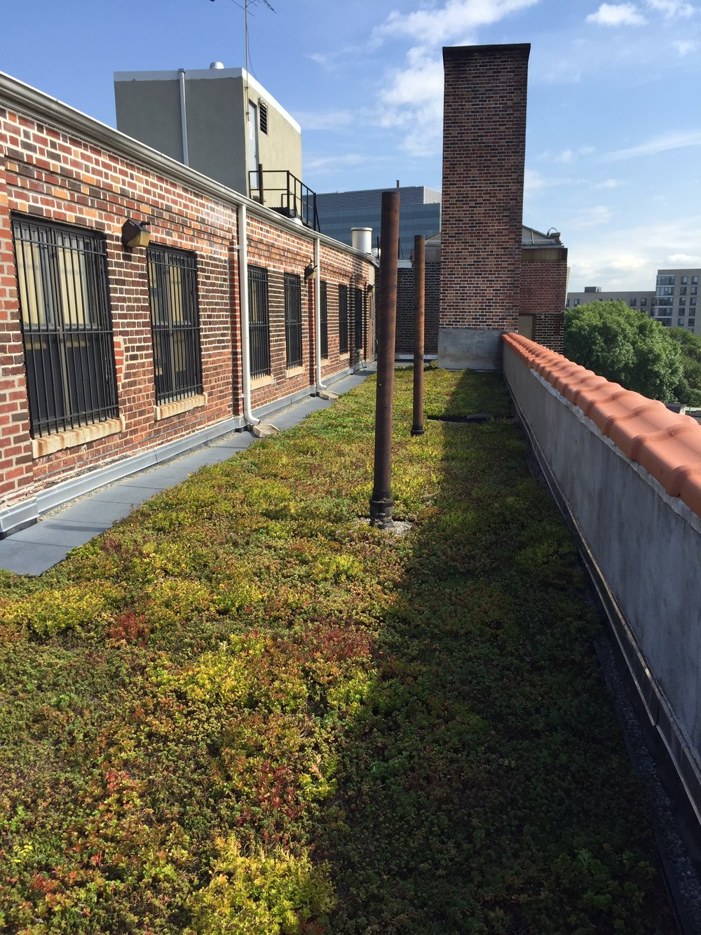 logan gardens nycswcd_green_roof_highview_creations_5.jpg