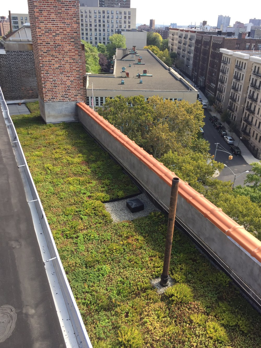 logan gardens nycswcd_green_roof_highview_creations_2.jpg